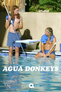 Agua Donkeys 2020