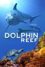 Dolphin Reef 2020 en Streaming HD Gratuit !