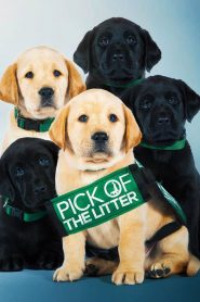 Pick of the Litter 2019 en Streaming HD Gratuit !