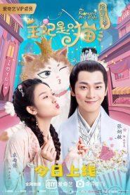 报告王爷,王妃是只猫第一季 2020 en Streaming HD Gratuit !