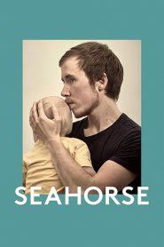 Seahorse 2020 en Streaming HD Gratuit !