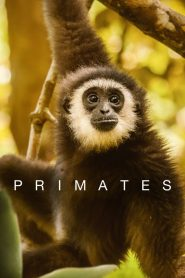 Primates 2020 en Streaming HD Gratuit !