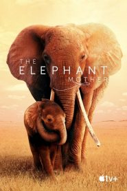 The Elephant Mother 2019 en Streaming HD Gratuit !
