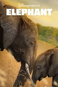 Elephant 2020 en Streaming HD Gratuit !