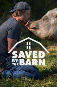 Saved By The Barn 2020 en Streaming HD Gratuit !