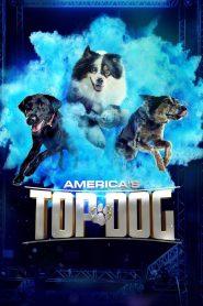 America's Top Dog 2020 en Streaming HD Gratuit !