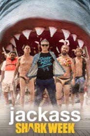 Jackass Shark Week 2021 en Streaming HD Gratuit !