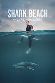 Shark Beach with Chris Hemsworth 2021 en Streaming HD Gratuit !
