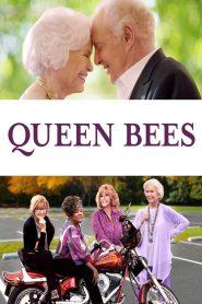 Queen Bees 2021 en Streaming HD Gratuit !
